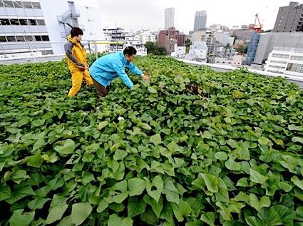 Tokyo-roof